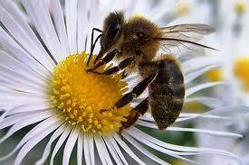 Los Centros Elefante Azul de Avilés te invitan a salvar a las abejas.