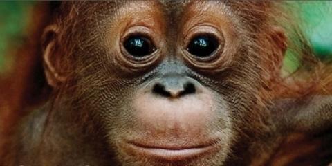 Elefante Azul Aviles - Salvemos a los Orangutanes - Centro de lavado de coches Elefante Azul Avilés